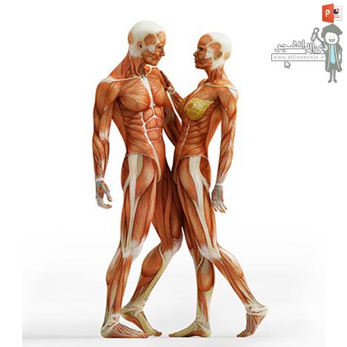 انواع ناهنجاریهای جسمانی در آناتومی بدن