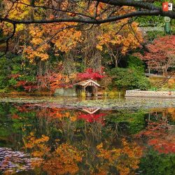 دانلود پاورپوینت پروژه باغ ژاپنی